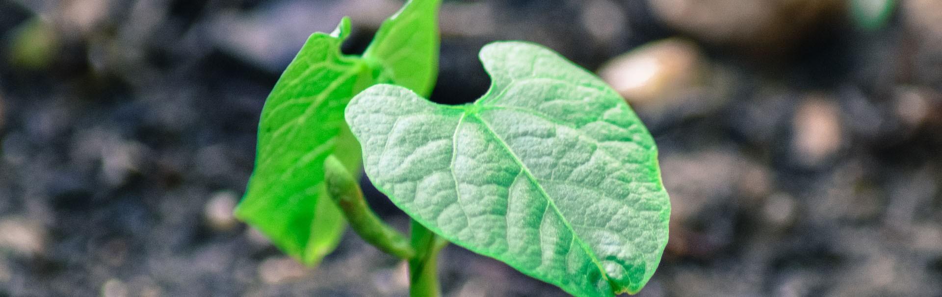Résine écologique - 7 étanche